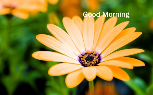 Sweet Morning Flower – Image