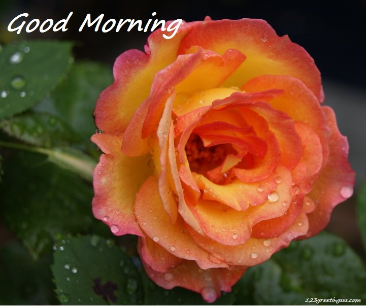Good Morning Orange Flowers : Good morning wishes with flowers pictures images page