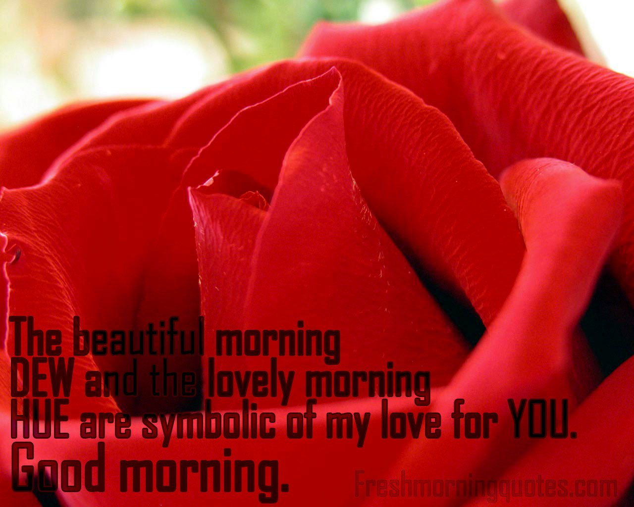 Good Morning Wishes With Flowers Pictures Images