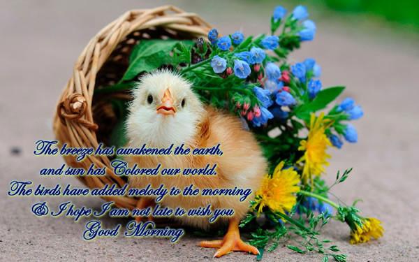 The Breeze Has Awakened-Good Morning-wg16742