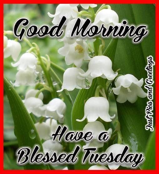 White flower good morning white flower good morning wg11707 mightylinksfo