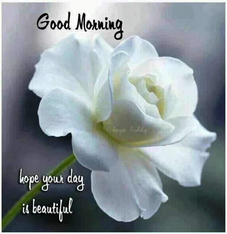 Good morning wishes with flowers pictures images page 29 white rose good morning wg023454 mightylinksfo