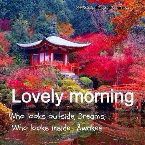 Who Looks Outside Dreams-wg16793