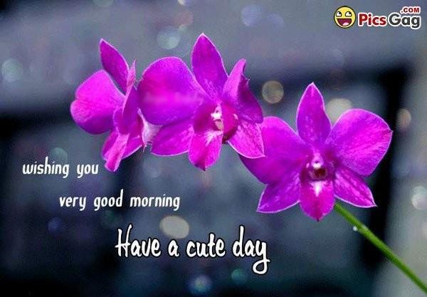 Wishing You Very Good Morning-wg16803