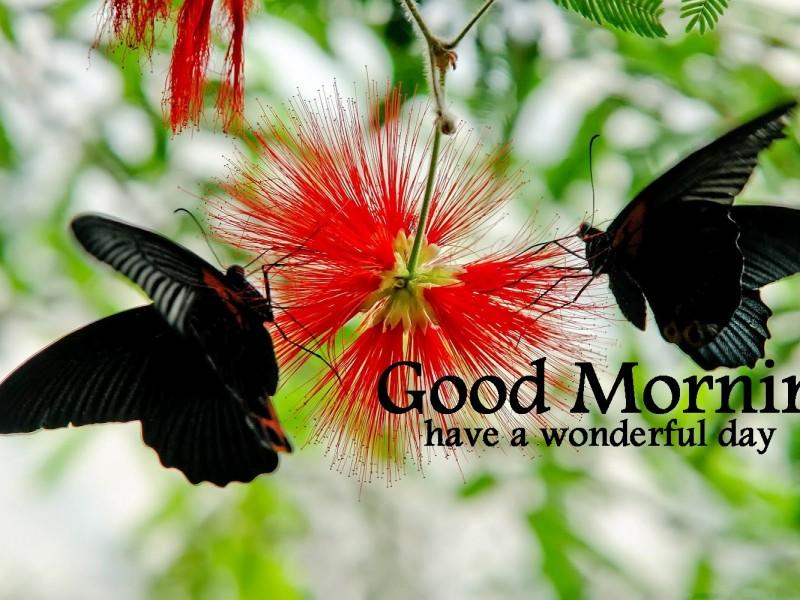 Wonderful Butterflies Good Morning