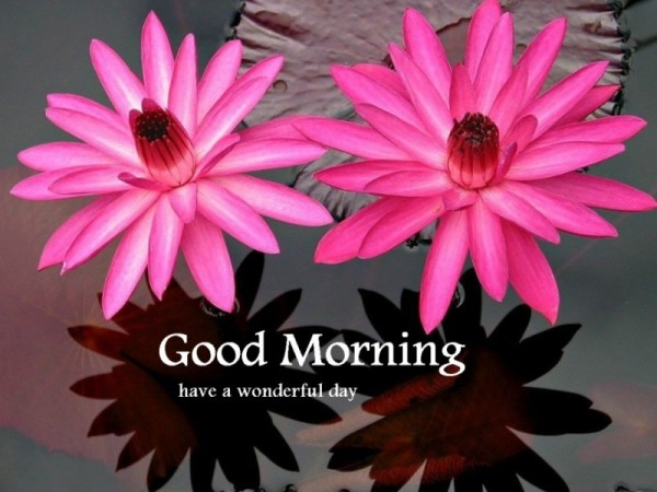 Wonderful Morning Flowers-wg16809