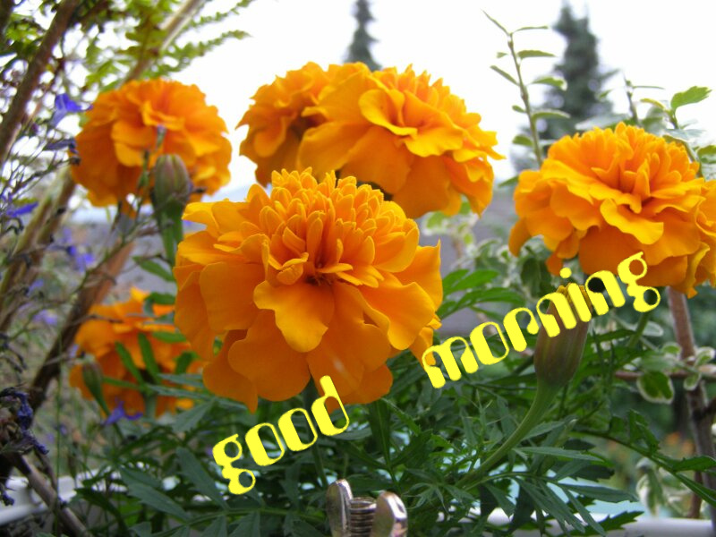 Good Morning Wishes With Flowers Pictures, Images - Page 34