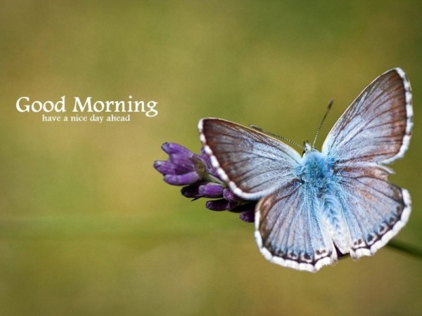 Good Morning – Butterfly On Flower