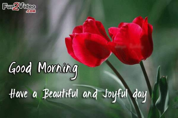 Good Morning Wishes With Flowers Pictures Images Page 17